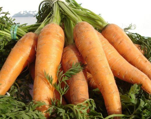 día mundial de la zanahoria