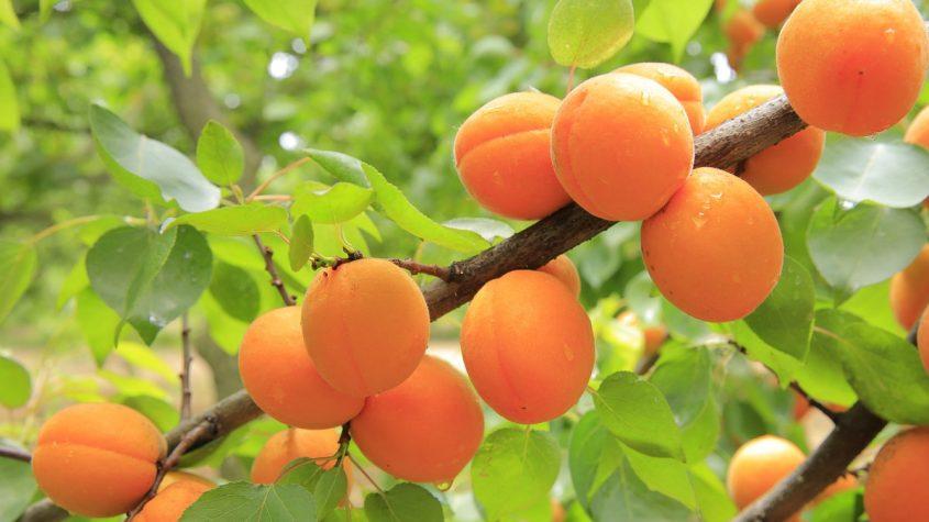 ¿Qué frutas y verduras son de temporada en el mes de mayo?